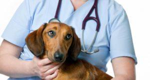 Campanie de sterilizare a câinilor cu stăpân