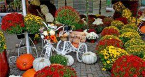 Festivalul florilor de toamnă - ediția a VII -a