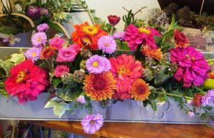 Sfaturi utile de la Geta Arhire pentru plante în sezonul rece