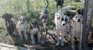 Adoptă un câine din padocul Ecosal Galaţi! Este foarte simplu!