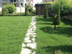 Cum să ai un gazon verde și frumos Sfaturi utile de la Passiflora Garden