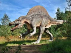 Dr. Dino şi lumea dinozaurilor - la FasTracKids Summer Camp Galati