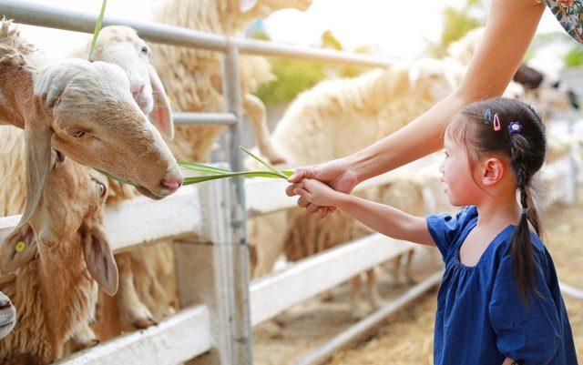 Vizitează Grădina Zoologică Brăila - un loc preferat de cei mici