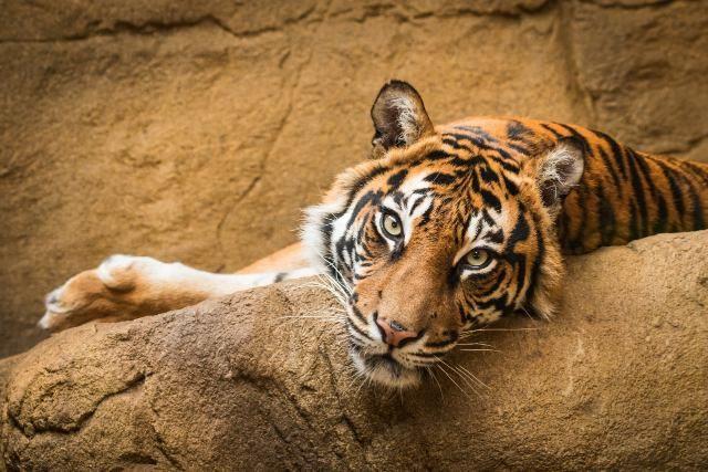 Grădina Zoologică Galaţi - regulament de vizitare şi program