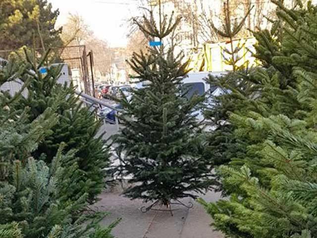 """Piața Centrală """"Câștigă 10 brazi de Crăciun"""""""