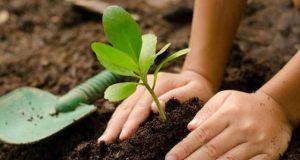 Activitate de împădurire la Pădurea Gârboavele pe 23 martie