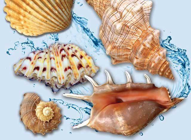 """Expoziția """"Cochilii, nestemate ale mării"""" va avea vernisajul pe 15 martie"""