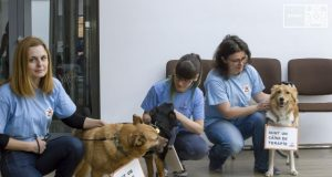 Galațiul are o campania unică în țară de sterilizare a câinilor fără stăpân