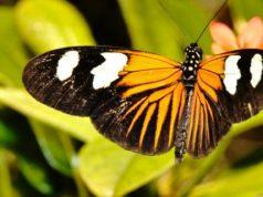 Expoziție de fluturi vii de la Complexul Muzeal de Științele Naturii