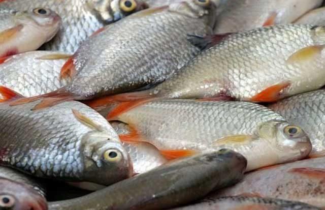 S-a lansat bursa de peşte electronică din România