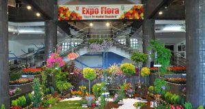 Expo-Flora, Flori la malul Dunării - expoziție cu vânzare între 7 și 9 iunie