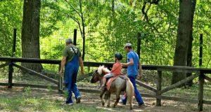 Ponei pentru copii - noua atracţie la Grădina Zoologică din Brăila