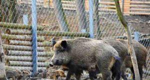 Parcul Zoo Brăila închide