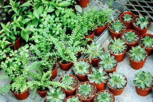 Sfaturi, idei și plante pentru grădina de acasă pe timp pandemie